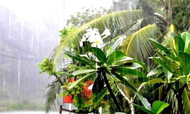 дождь на листья