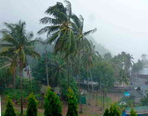 пальма в дождь