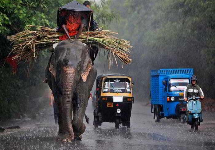 Когда сезон дождей в Индии
