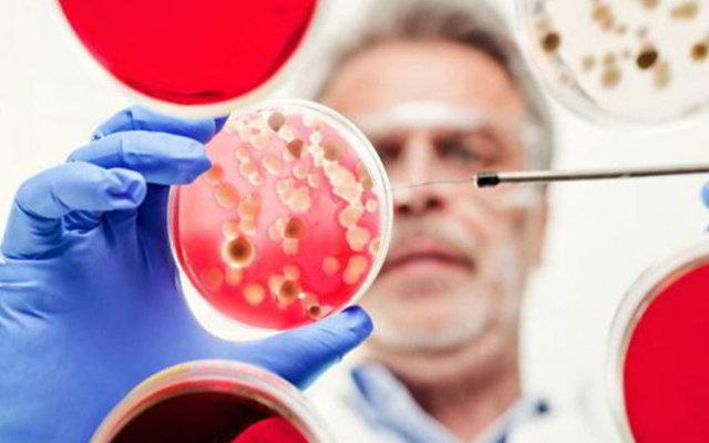 мужчина изучает бактерии