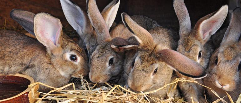 Кроликовод кто это