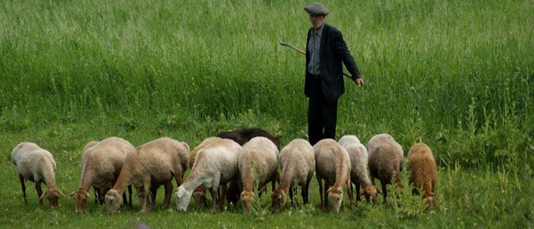 Пастух кто это