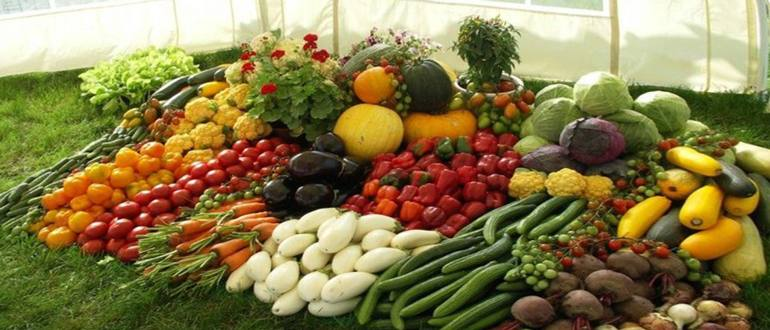 Изображение - Кто выращивает овощи 542200