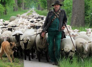 Пастух в России