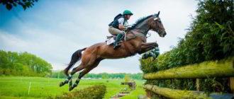 конный спорт что это